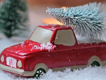 abete-bianco-pianta-natalizia-proprietà-curative